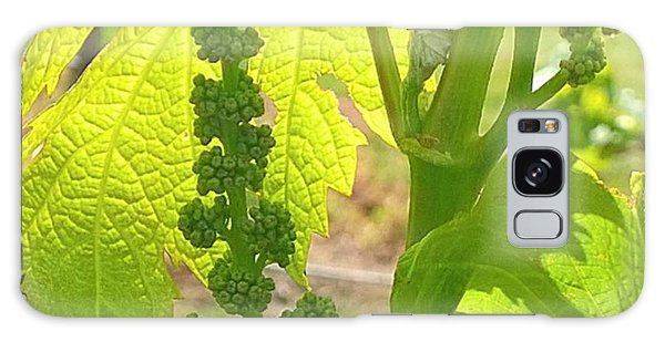 #wine On The #vine 😊 #vineyard Galaxy Case by Shari Warren