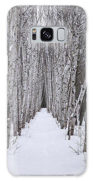 Winter Birch Path Galaxy Case