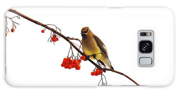 Winter Birds - Waxwing  Galaxy Case by Andrea Kollo