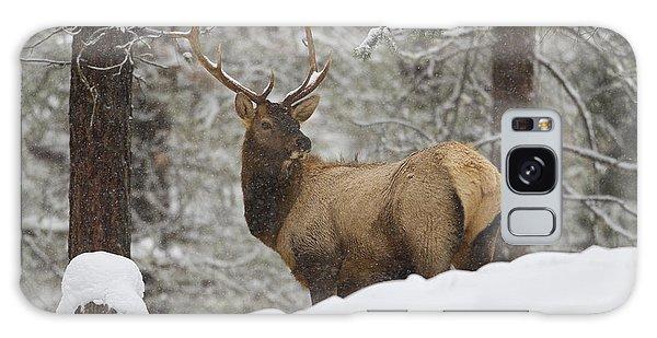 Winter Bull Galaxy Case