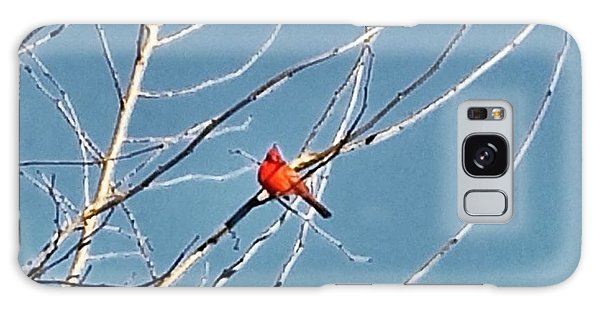 Galaxy Case featuring the photograph Winter Cardinal  by Deb Martin-Webster