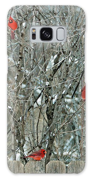 Winter Cardinals Galaxy Case
