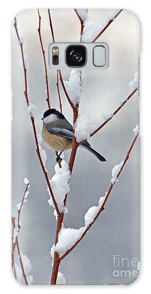 Winter Chickadee Galaxy Case
