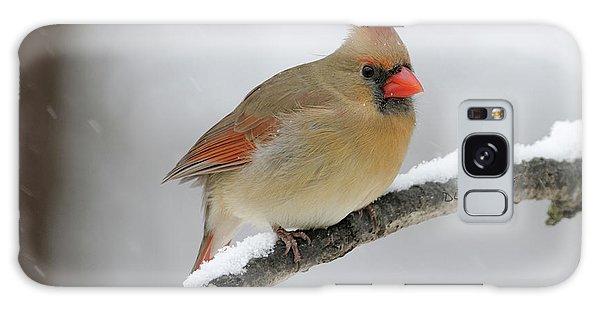 Winter Female Cardinal Galaxy Case