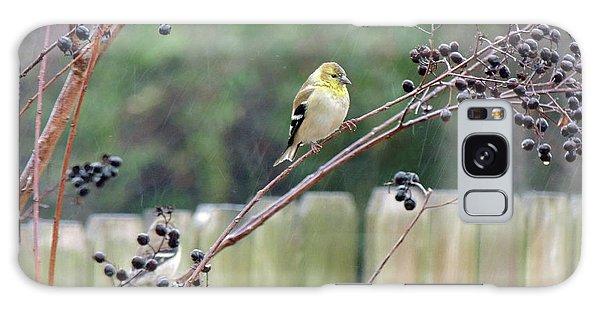 Winter Goldfinch In The Rain Galaxy Case