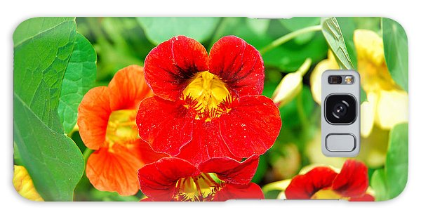 Winter Park Nasturtium 2 Galaxy Case