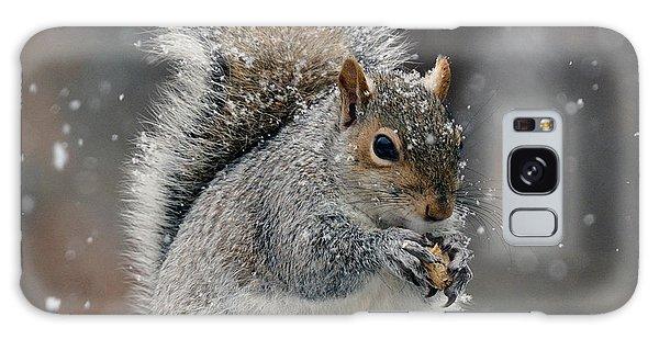 Winter Squirrel Galaxy Case by Diane Giurco