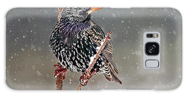 Winter Starling 2 Galaxy Case