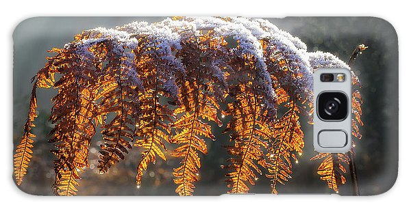 Winter Woods Galaxy Case by Shirley Mitchell