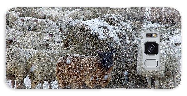 Wintering Sheep Galaxy Case
