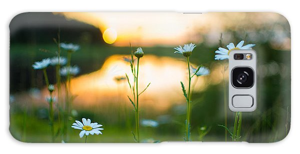 Wisconsin Daisies At Sunset Galaxy Case