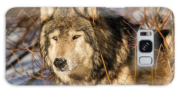 Wolf In Brush Galaxy Case