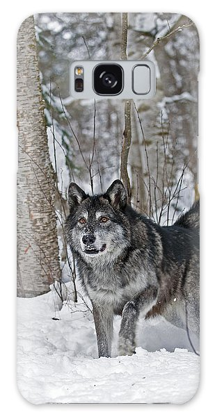 Wolf In Trees Galaxy Case