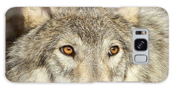 Wolf Portrait Galaxy Case by Jack Bell