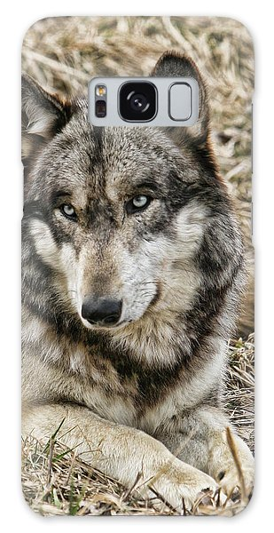 Wolf Portrait Galaxy Case by Shari Jardina