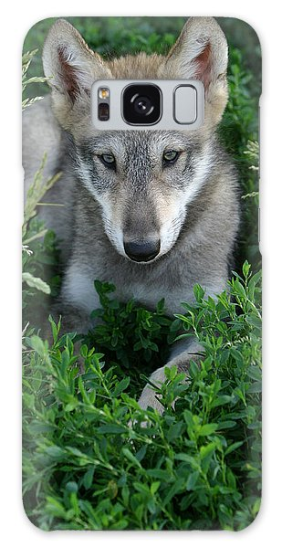 Wolf Pup Portrait Galaxy Case by Shari Jardina