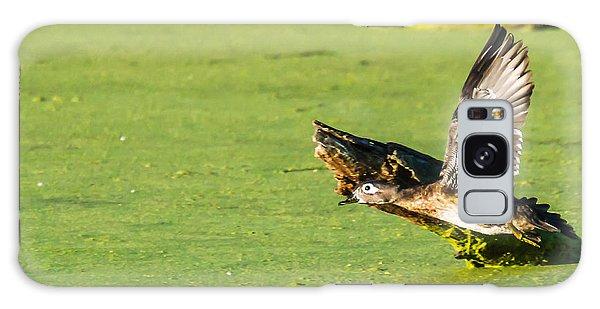 Wood Duck Hen Takes Flight Galaxy Case by Edward Peterson