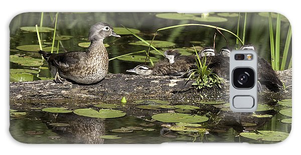 Wood Duck With Her Ducklings Galaxy Case