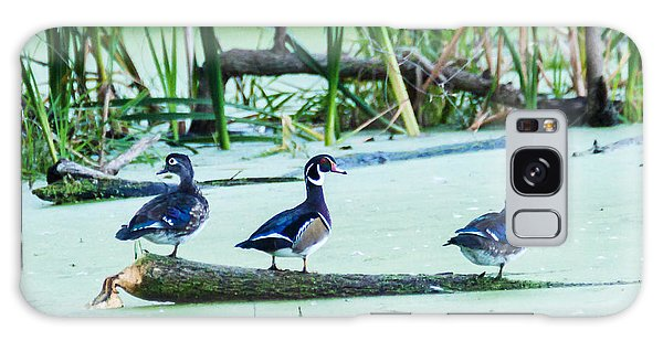 Wood Ducks All Grown Up Galaxy Case by Edward Peterson