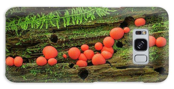 Wood Fungus Galaxy Case