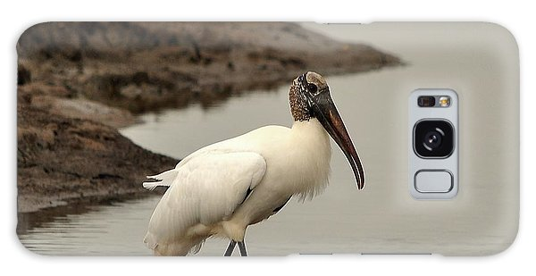 Wood Stork Walking Galaxy Case by Al Powell Photography USA