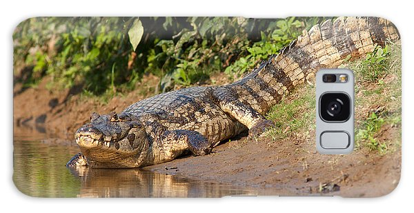 Alligator Crawling Into Yakuma River Galaxy Case
