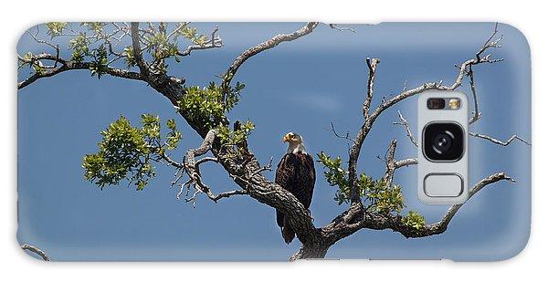 Yawkey Wildlife Reguge - American Bald Eagle Galaxy Case by Suzanne Gaff
