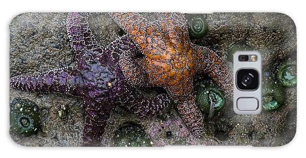Orange And Purple Starfish II Galaxy Case