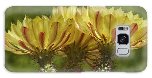 Yellow And Red Cactus Flowers Galaxy Case