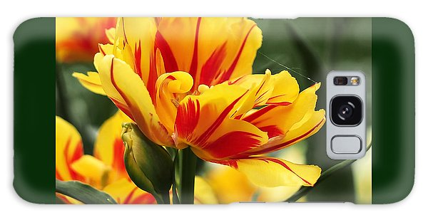 Yellow And Red Triumph Tulips Galaxy Case by Rona Black