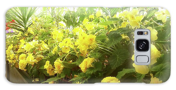 Yellow Begonias Bloom In The Hothouse Galaxy Case