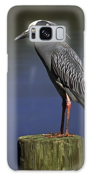 Yellow-crowned Night Heron Galaxy Case by Sally Weigand