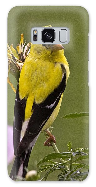 Yellow Finch - Color Impact - Artist Cris Hayes Galaxy Case