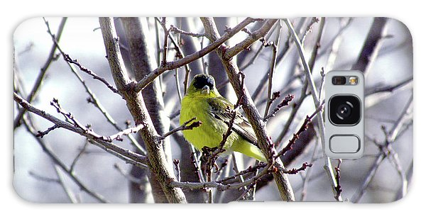 Yellow Finch Galaxy Case