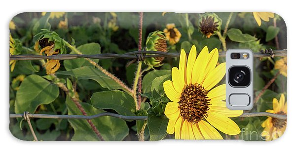 Yellow Flower Escaping From A Barb Wire Fence Galaxy Case