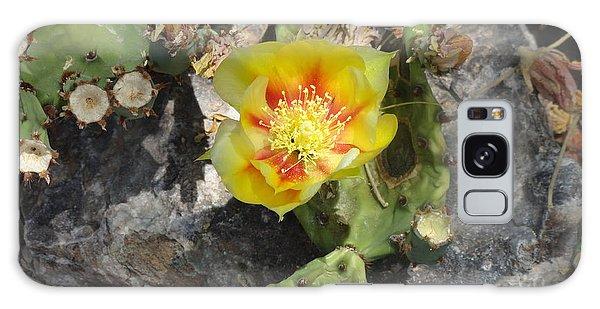 Yellow Cactus Flower Blossom Galaxy Case