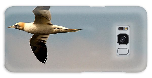 Yellow Headed Gull In Flight Galaxy Case