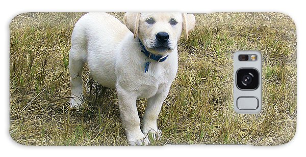 Yellow Labrador Puppy At Wanting To Play. Galaxy Case