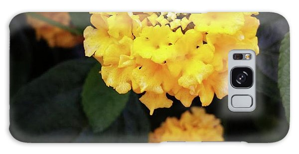 Galaxy Case featuring the photograph Yellow Lantanas Along The Scenic Drive by Mr Photojimsf