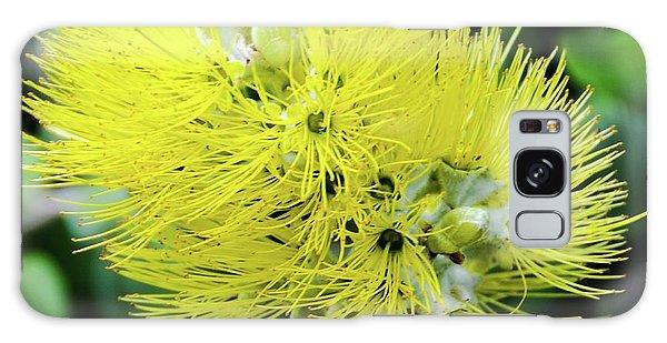 Yellow Ohia Flowers - Hawaii  Galaxy Case