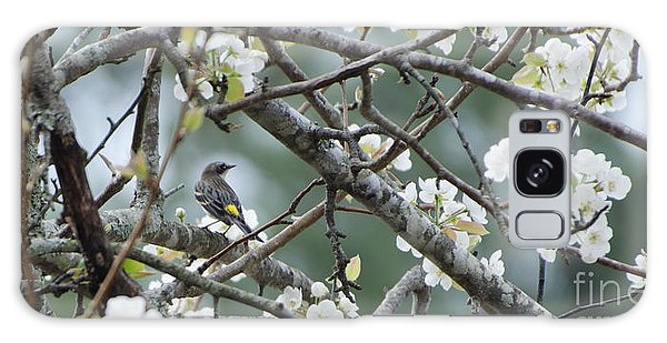 Yellow-rumped Warbler In Pear Tree Galaxy Case