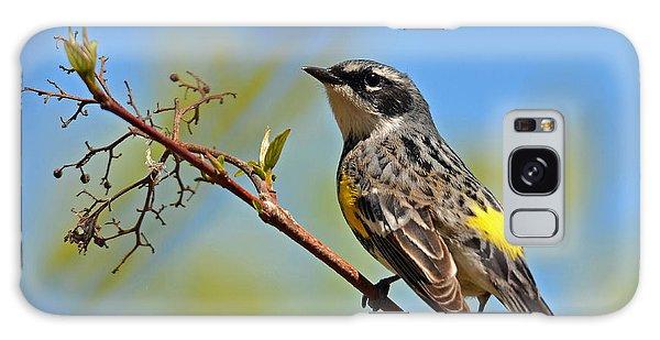 Yellow Rumped Warbler Galaxy Case by Rodney Campbell