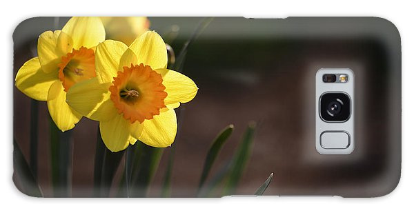 Yellow Spring Daffodils Galaxy Case