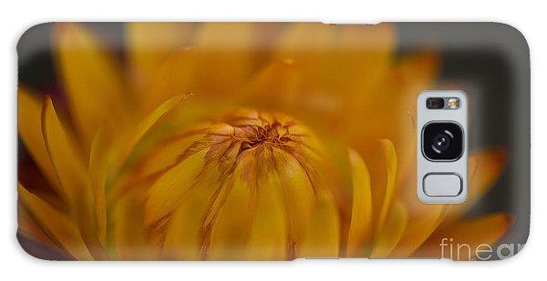Yellow Strawflower Blossom Close-up Galaxy Case
