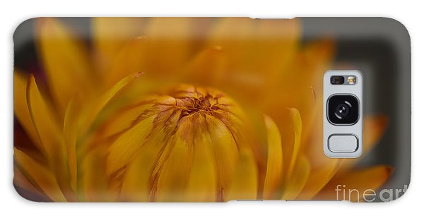 Yellow Strawflower Blossom Close-up Galaxy Case