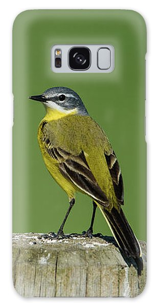 Yellow Wagtail Perching On The Roundpole Galaxy Case