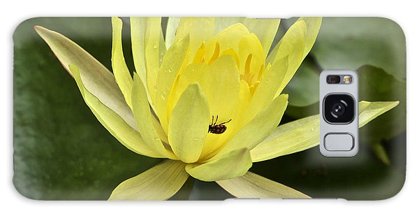 Yellow Waterlily With A Visiting Insect Galaxy Case
