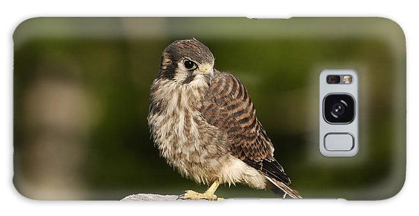Young American Kestrel Galaxy Case