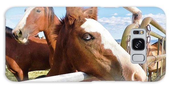 Young Blue Eyed Horse Galaxy Case