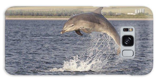 Young Bottlenose Dolphin - Scotland #13 Galaxy Case
